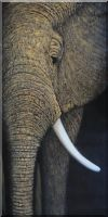 Large African Elephant Head II Oil Painting  48 x 24 inches