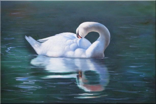 The Sleeping Swans >> Sleeping Swan In Placid Water Oil Painting Animal Naturalism 24 X 36