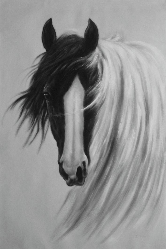 Framed Gorgeous Black White Horse With Long And Flowing White Manes Oil Painting Animal Naturalism 36 X 24 Inches
