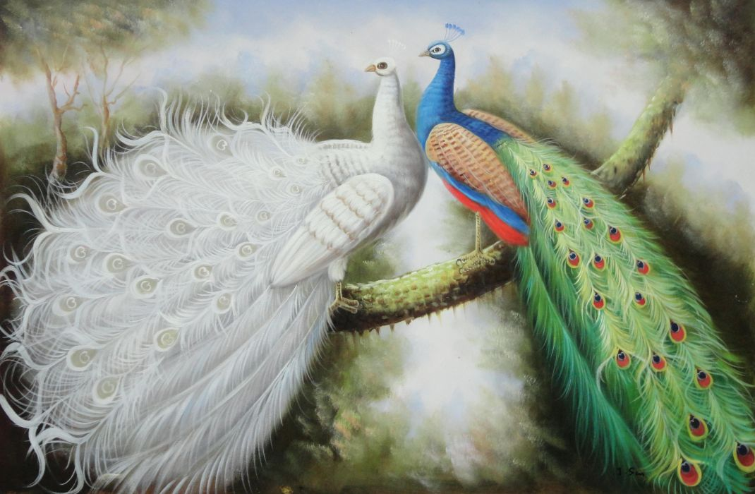 Beautiful White And Blue Peacocks Oil Painting Animal