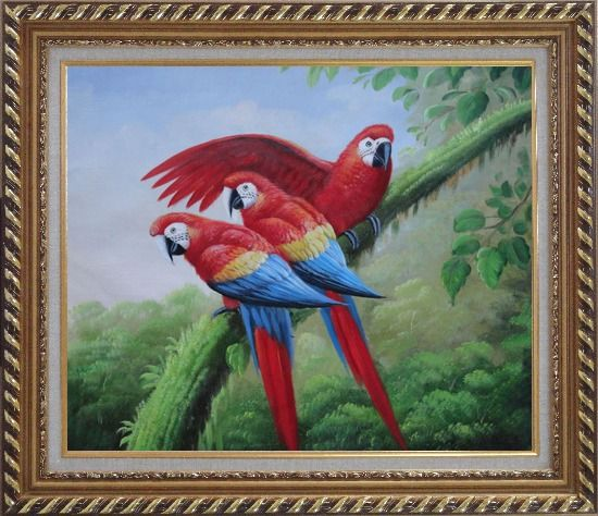 Framed Three Red and Blue Macaw Parrots on Tree Oil Painting Animal Naturalism Exquisite Gold Wood Frame 26 x 30 Inches