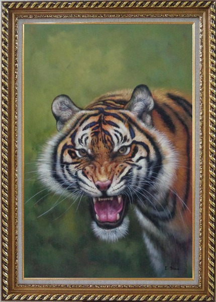 Framed Head of Ferocious Tiger With Open Mouth Oil Painting Animal Classic Exquisite Gold Wood Frame 42 x 30 Inches