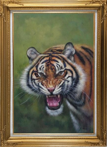 Framed Head of Ferocious Tiger With Open Mouth Oil Painting Animal Classic Gold Wood Frame with Deco Corners 43 x 31 Inches
