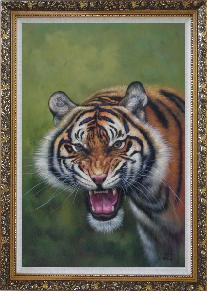 Framed Head of Ferocious Tiger With Open Mouth Oil Painting Animal Classic Ornate Antique Dark Gold Wood Frame 42 x 30 Inches