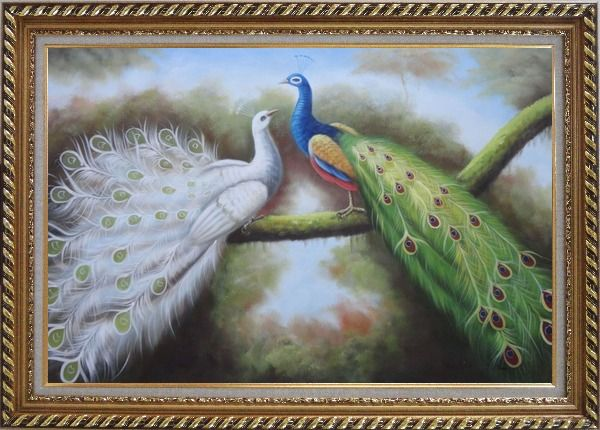 Framed Beautiful Blue and White Peacocks Playing with Each Other Oil Painting Animal Naturalism Exquisite Gold Wood Frame 30 x 42 Inches